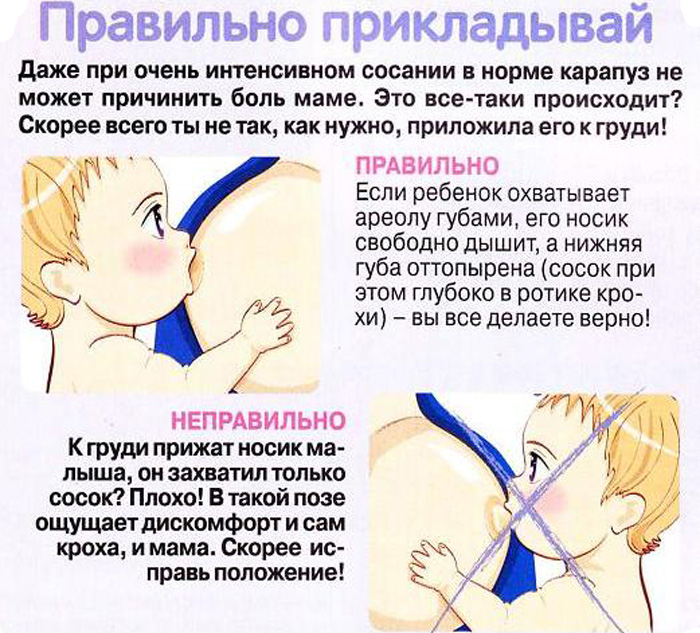 Правильный и интенсивный отсос, порно онлайн русская госпожа учит мужика сосать